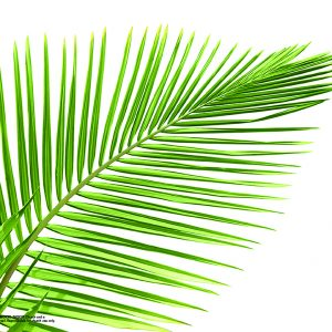 Palm Sunday | Zechariah 9:8-10