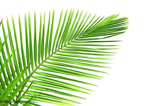 Holy Week | Palm Sunday – Jesus is King
