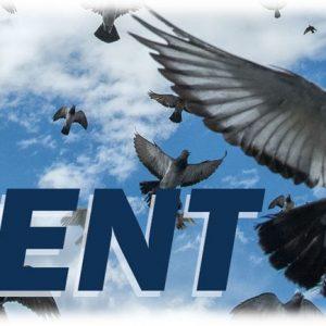 Sent | Incarnate the Kingdom